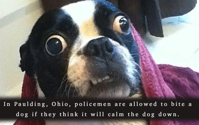 Stupid Laws Biting A Dog