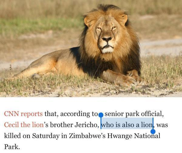 You Had One Job Lion
