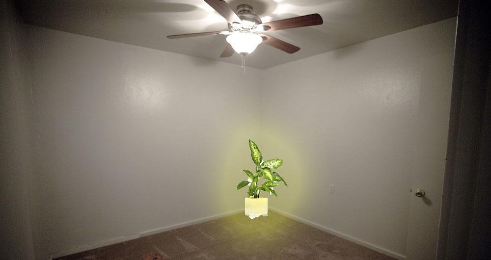 Best Houseplants Shitty Apartment