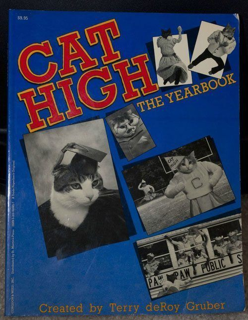 Cat High