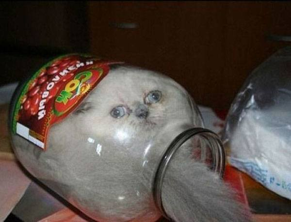 Cat Jar Animal Regrets