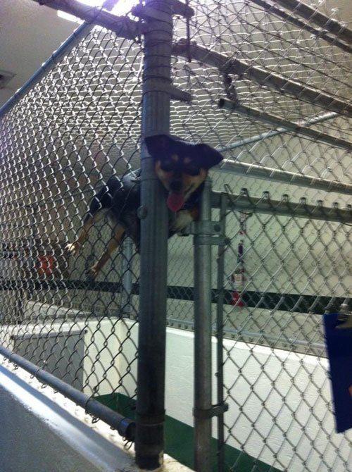 Fence Dog Animal Regrets