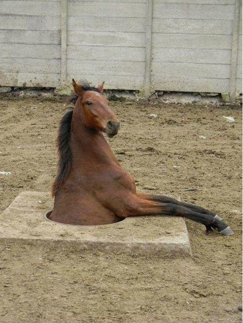 Horse In The Ground