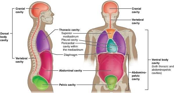 Human Body Totally Regular Things
