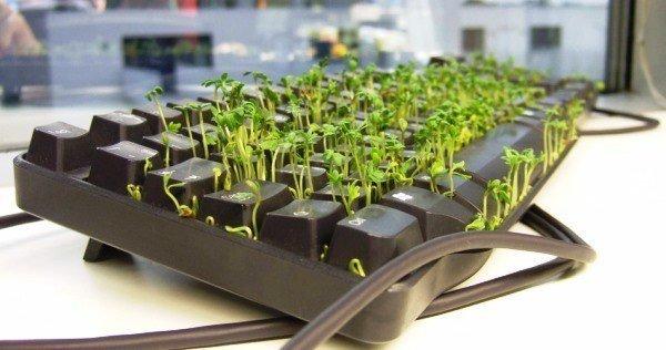 Keyboard Plant
