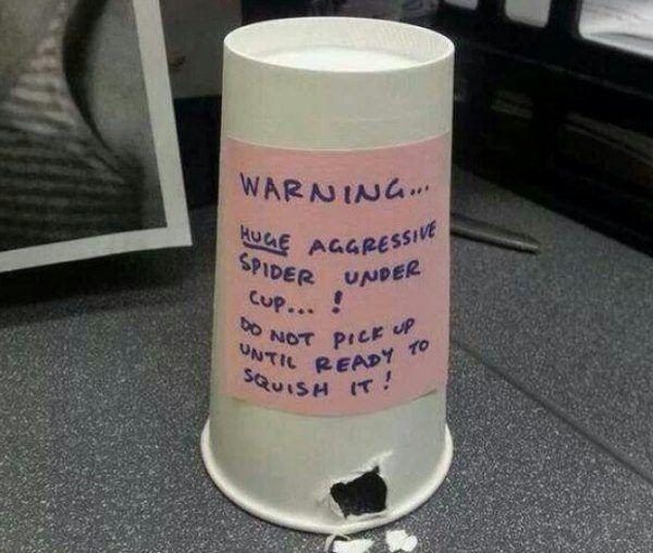 Office Pranks Spider Trap