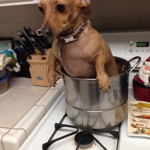 Pot Dog Animal Regrets