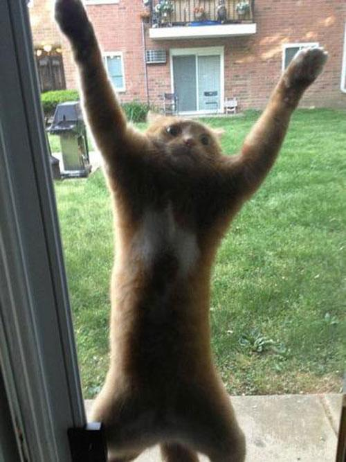 Screen Door Cat