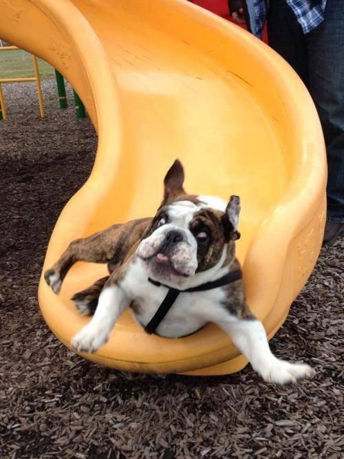 Slide Dog