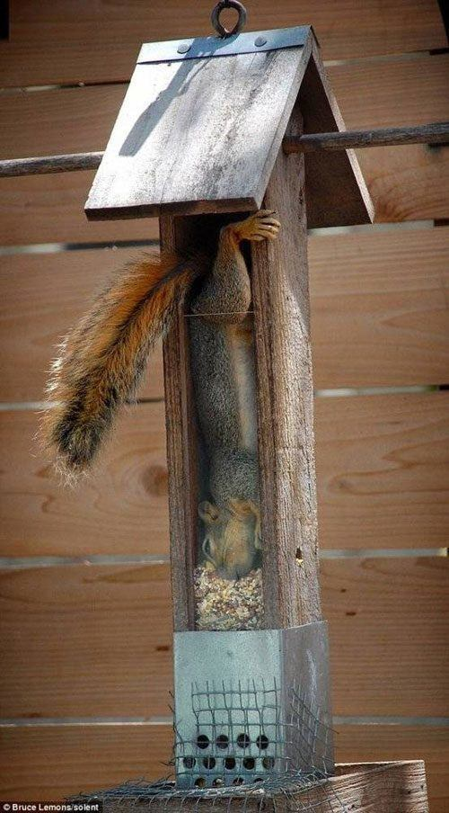 Squirrell Feeder