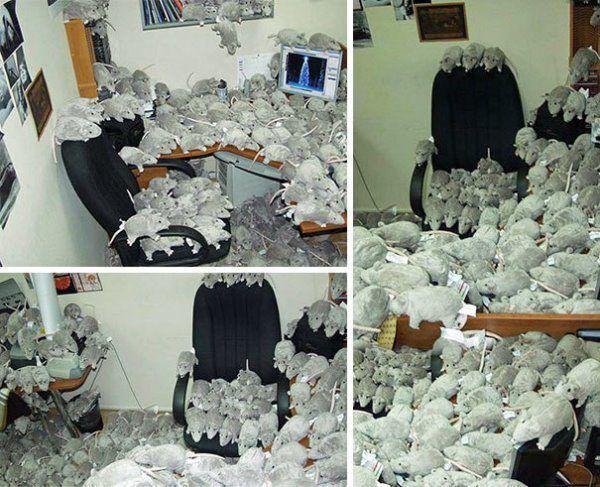 Stuffed Rats Office Prank