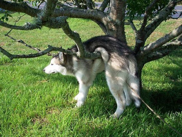 Tree Dog Animal Regrets