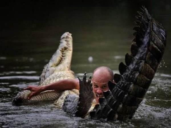 Wrestling An Alligator