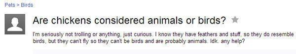 Chickens Animals Or Birds