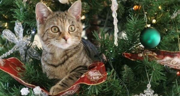 Cat Destroy Tree