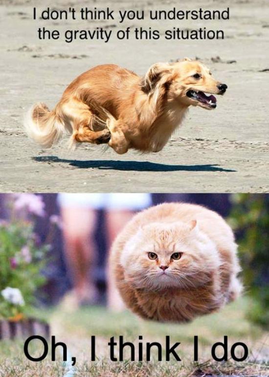Gravity Dog Bullet Cat