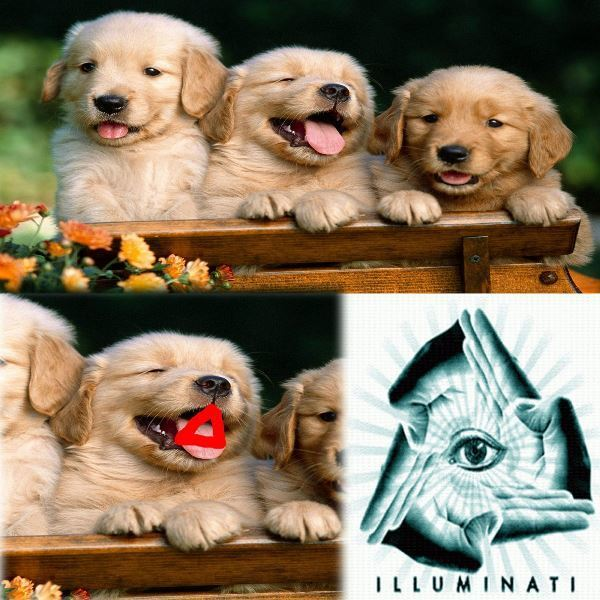 Puppy Illuminati