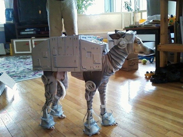Star Wars Fan Dog