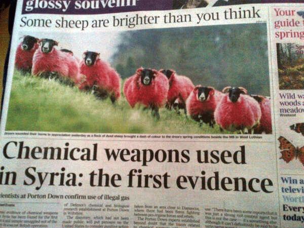 Syria Sheep Headline Fail