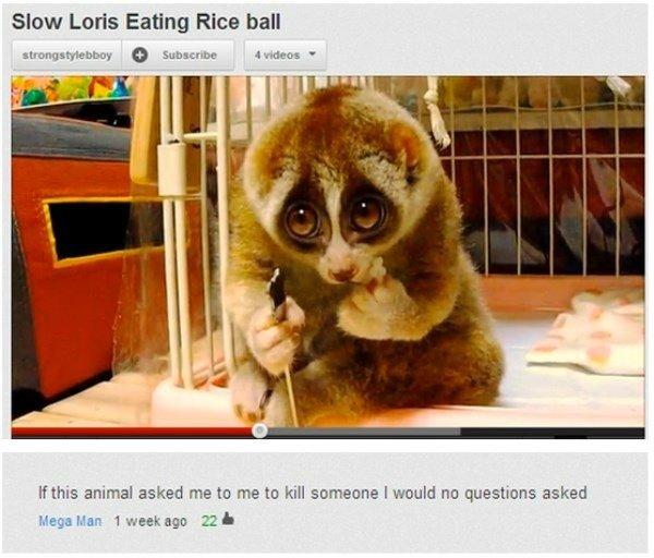 Slow Loris Youtube Comments