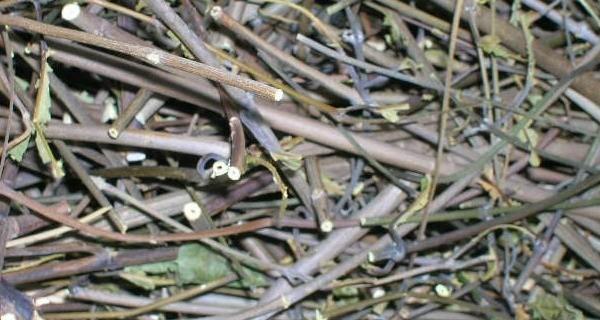 Batch Thin Sticks