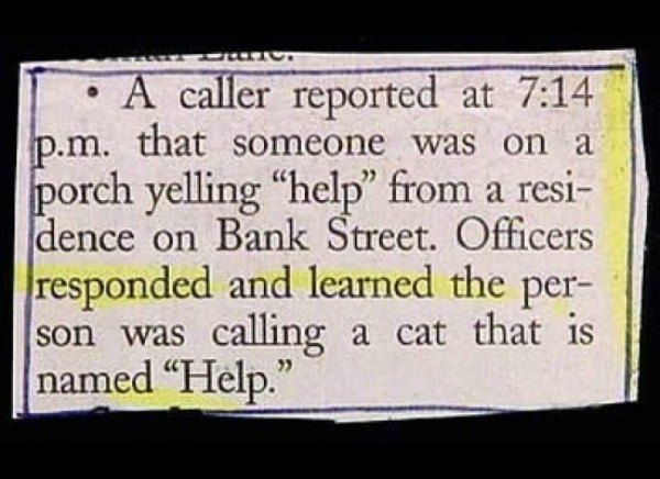 Cat Cops Called