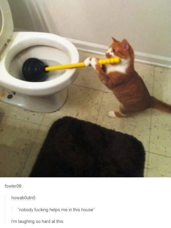Cat Plumbing