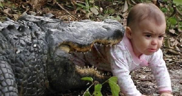 Children In Danger Aligator OG3