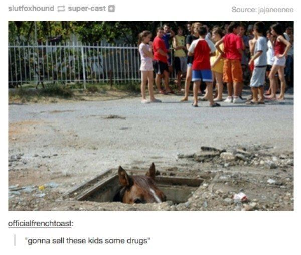 Horse Drugs