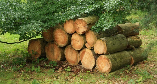 Log Neighbors Woodpile