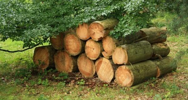 Log Neighbors Woodpile