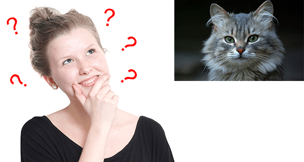 Mouth Kissing Cat Pros Cons