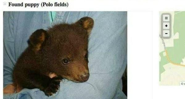 Puppy Bear