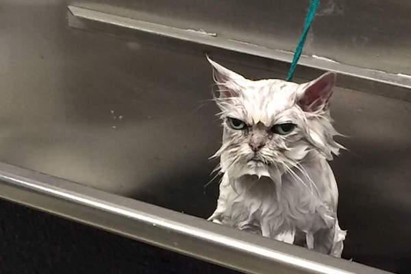 Bathtime Kitty