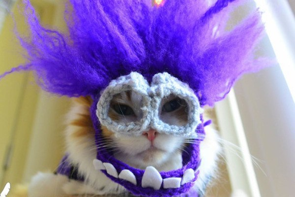 Carinvale Cat