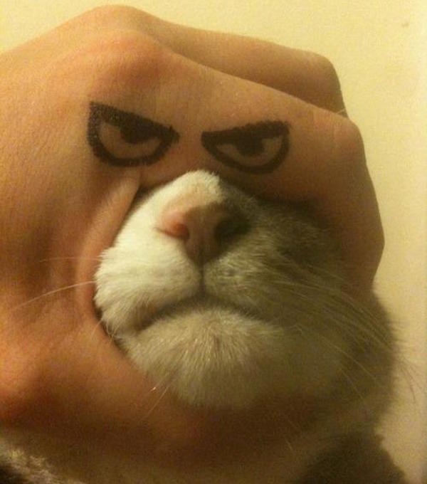 Cat Frown
