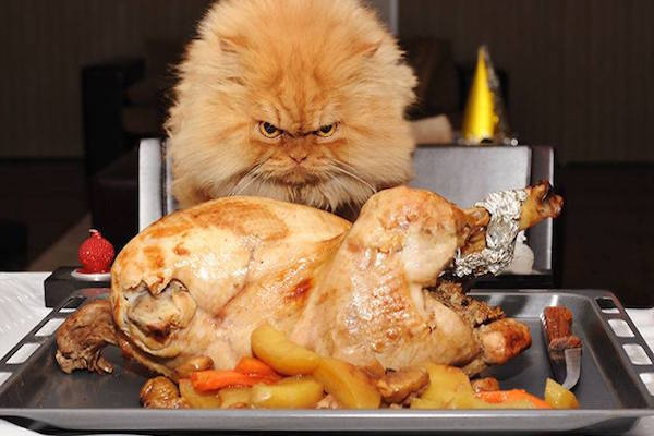 Cat Hates Your Cooking