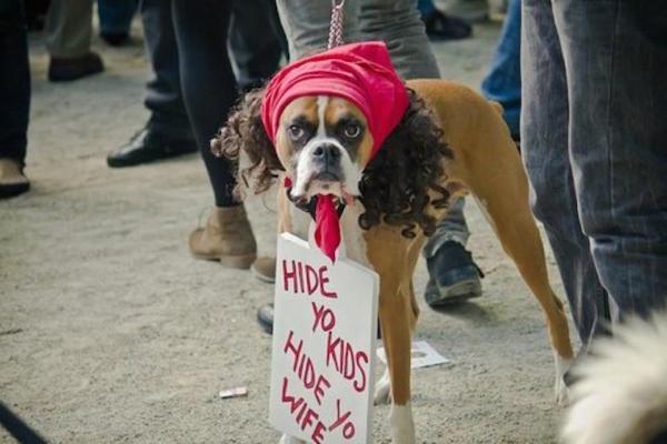 Hide Yo Dog