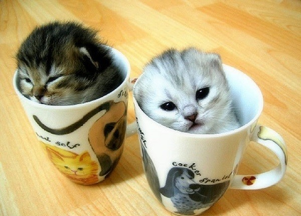 Kitten Coffee Mugs