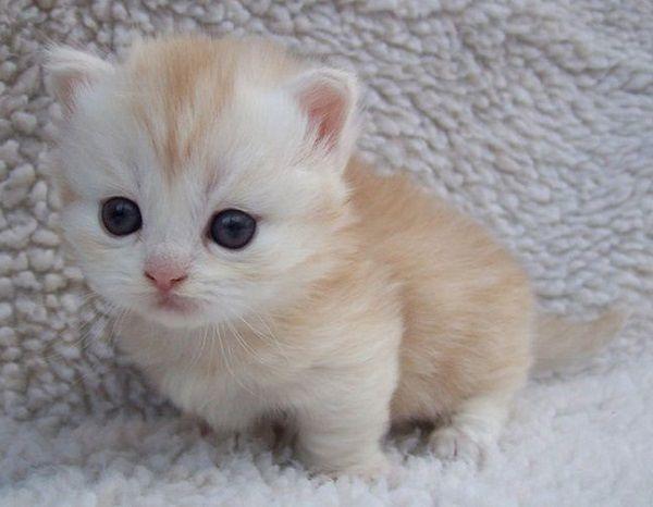 Kittens Wool