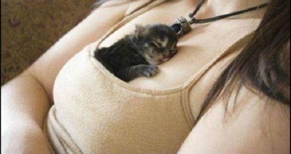 Photos Of Kittens OG3