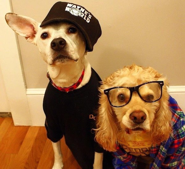 Wayne And Garth Dogs