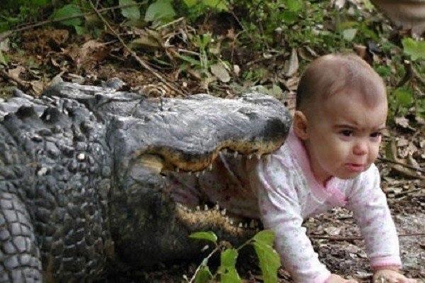 Children In Danger Aligator