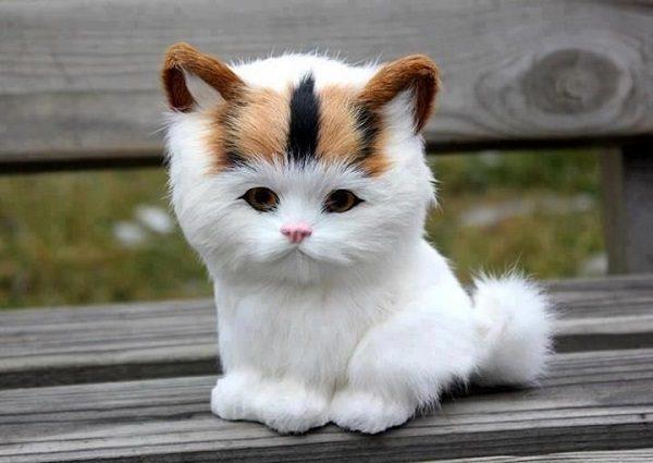 Kitten Bench