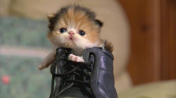 Kitten Boot