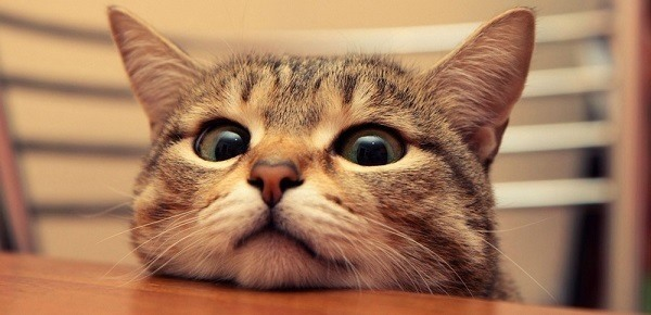 Kitten Head On Table