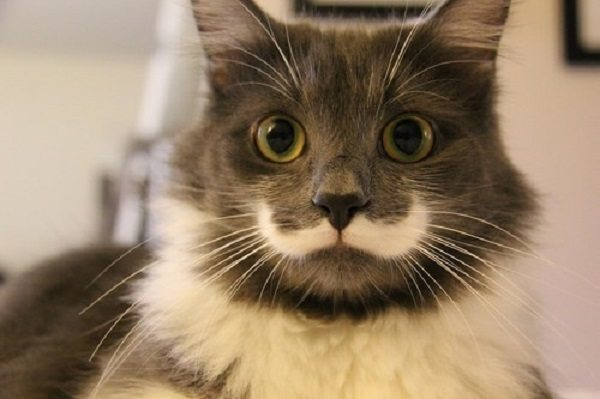 Kitten Moustache