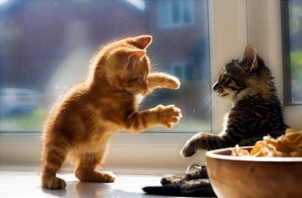 Kitten Scary