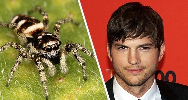 Ashton Kutcher Spider