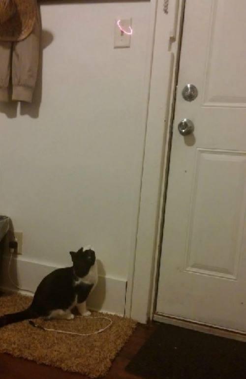 Light Switch Cat